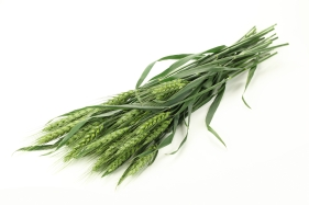 Green wheat ears