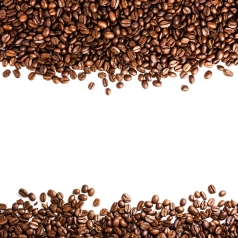 Coffee  beans isolated on white background with copyspace for text. Coffee background or texture