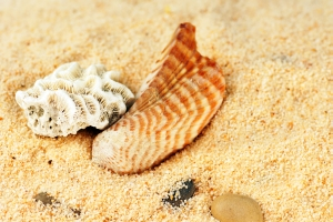 Coral and seashell on sand